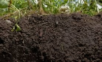 (Mis)Conceptions about Soil Health